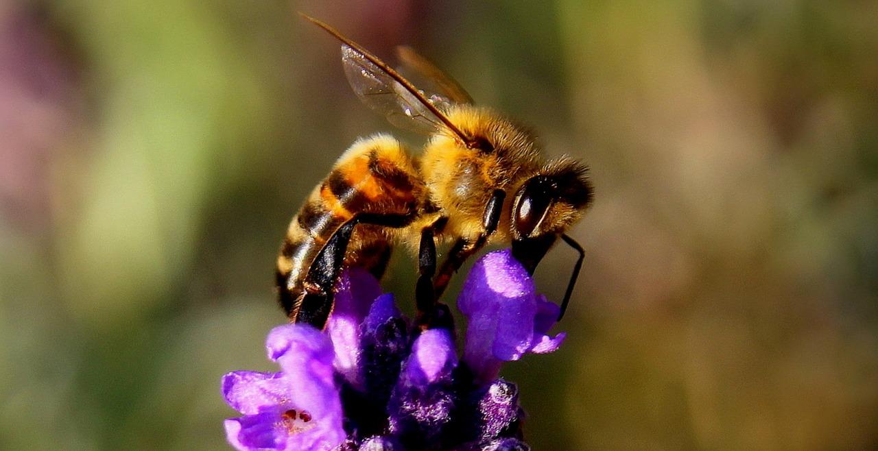 Matična mliječ - pravo bogatstvo pčelinjeg proizvoda