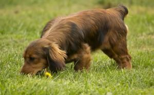 Fitoterapija pasa i mačaka