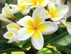 ulje Monoï de Tahiti